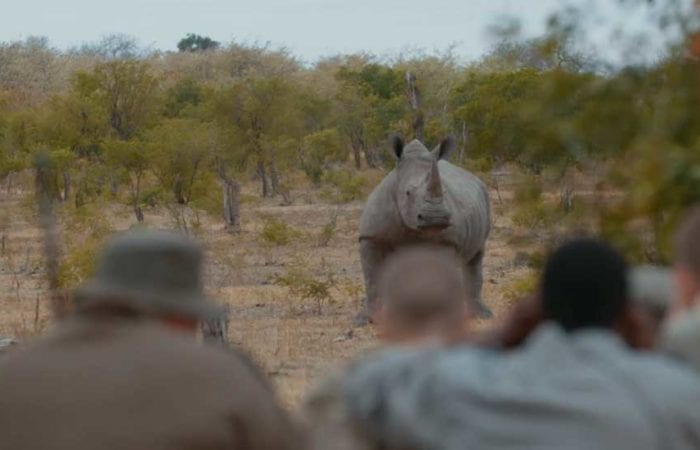 Responsible Resource Use and FIeld Guiding - the College's core training area is the ideal setting for training activities, offering many close encounters with rhino and other game.