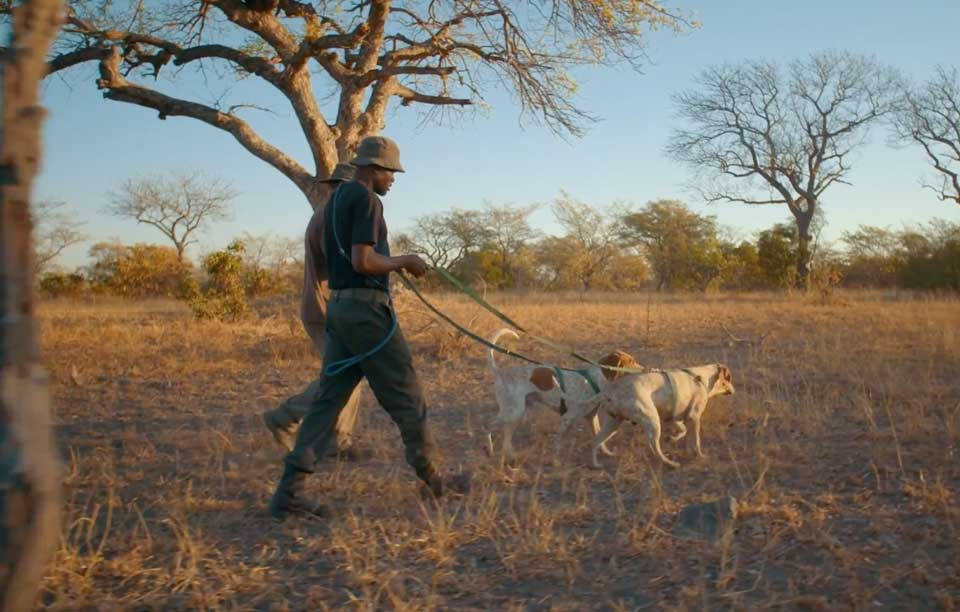IFAW grant to support the College's canine capability in the field of conservation